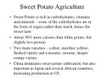 sweet potato agriculture