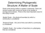 determining phylogenetic structure a matter of scale
