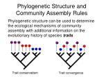 phylogenetic structure and community assembly rules