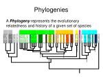 phylogenies