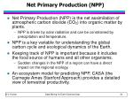 net primary production npp