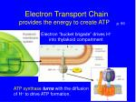 electron transport chain provides the energy to create atp