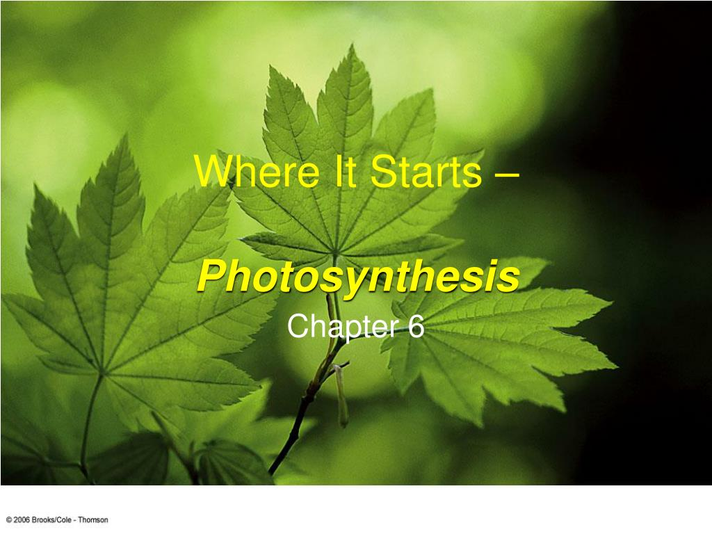 where it starts photosynthesis l.