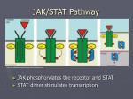 jak stat pathway5