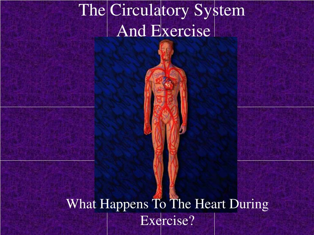 the circulatory system and exercise l.