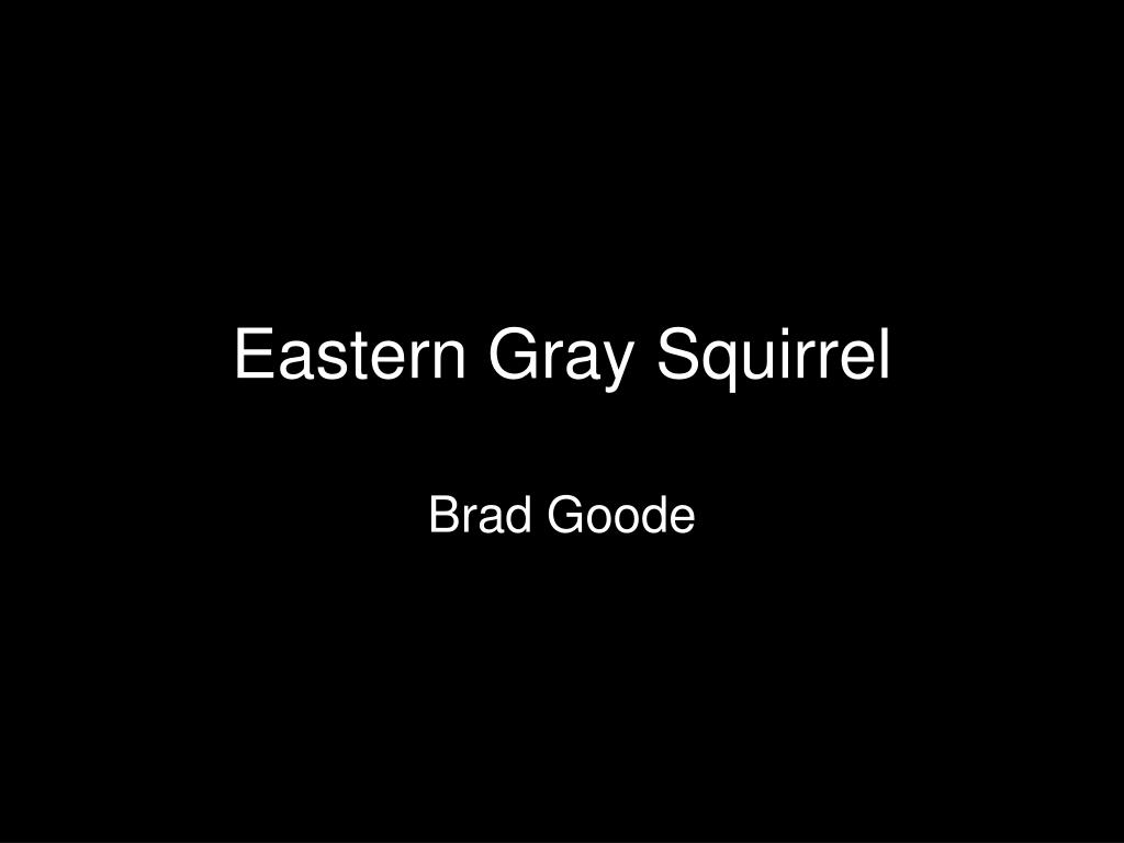 eastern gray squirrel l.