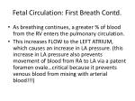 fetal circulation first breath contd10