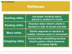 reflexes4