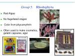 group 5 rhodophyta