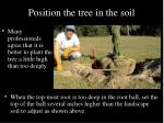 position the tree in the soil