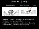 root ball quality