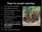 steps for proper planting34