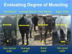 evaluating degree of muscling6