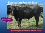 evaluating frame size22