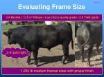 evaluating frame size24