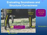 evaluating soundness and structural correctness15