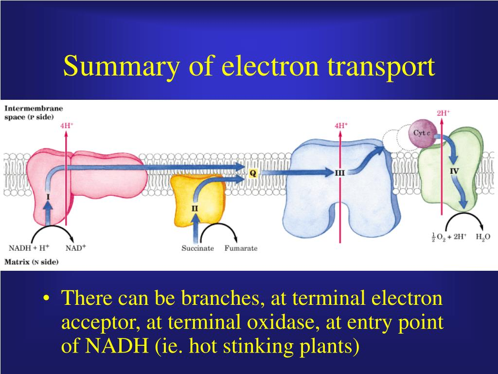 summary of electron transport l.