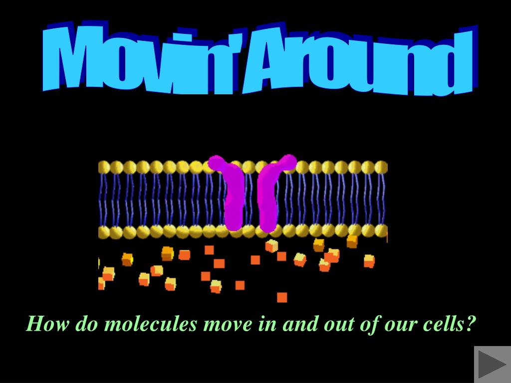how do molecules move in and out of our cells l.
