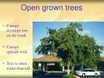 open grown trees