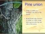 pine union
