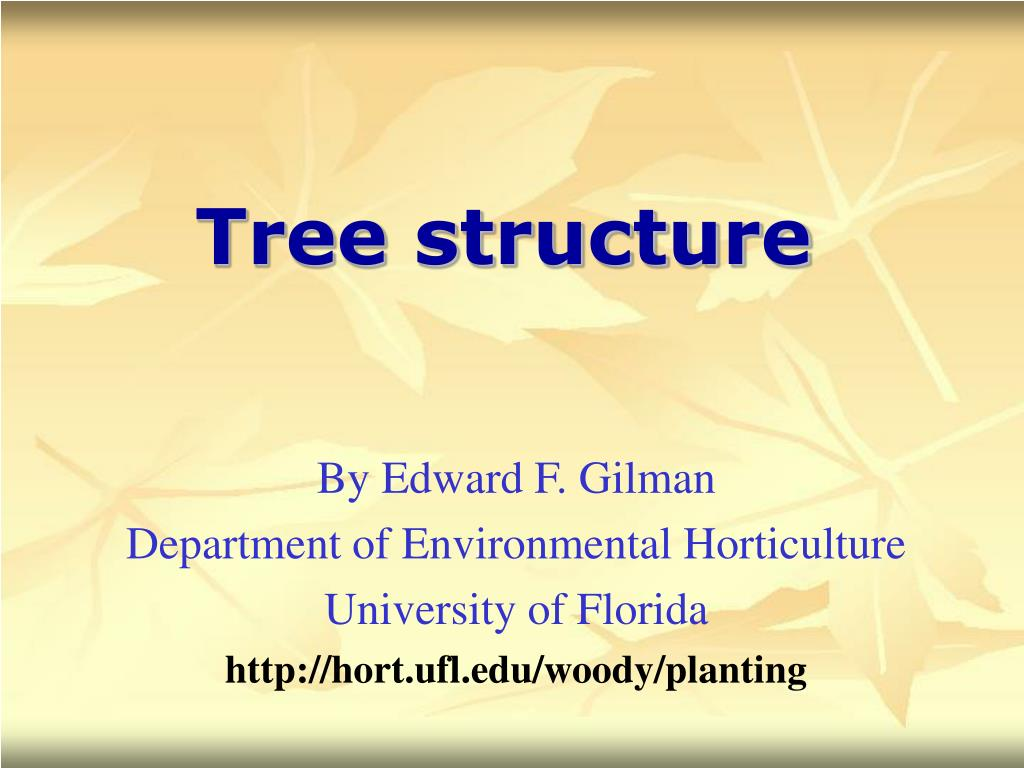 tree structure l.