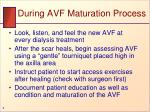 during avf maturation process