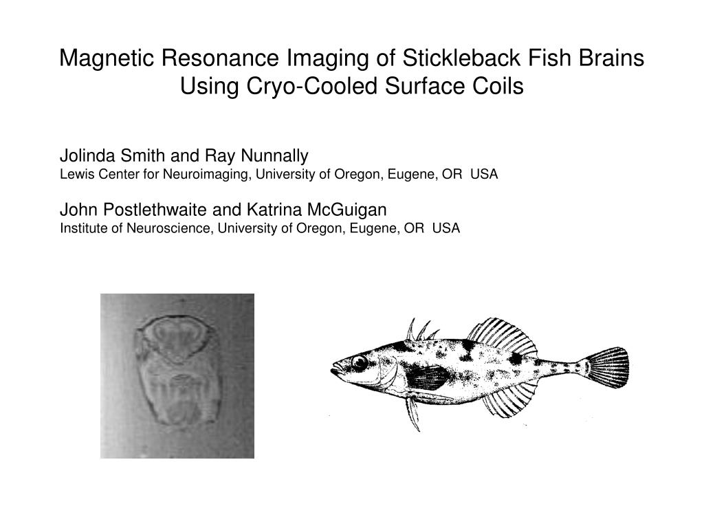 magnetic resonance imaging of stickleback fish brains using cryo cooled surface coils l.