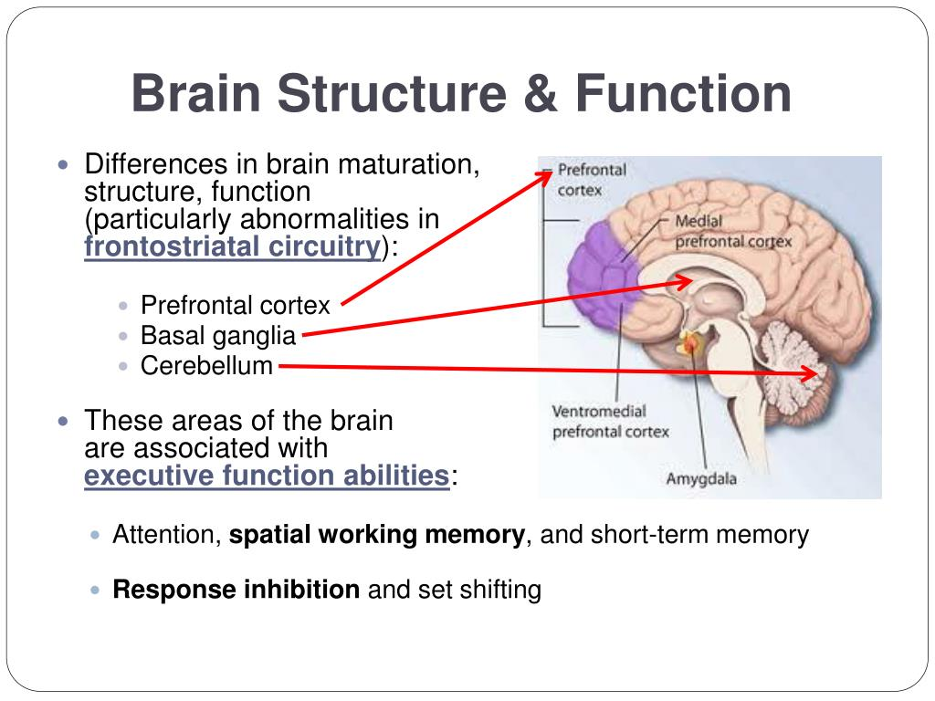 Brain Structure & Function