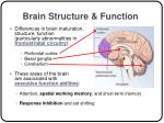 brain structure function