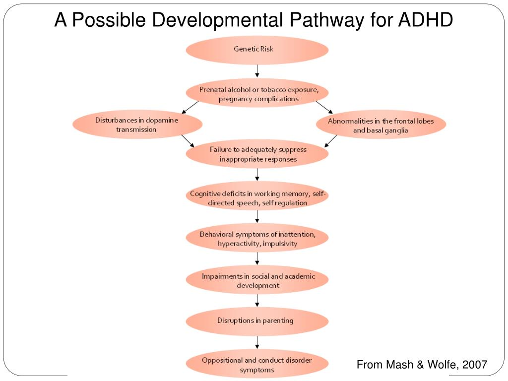 A Possible Developmental Pathway for ADHD