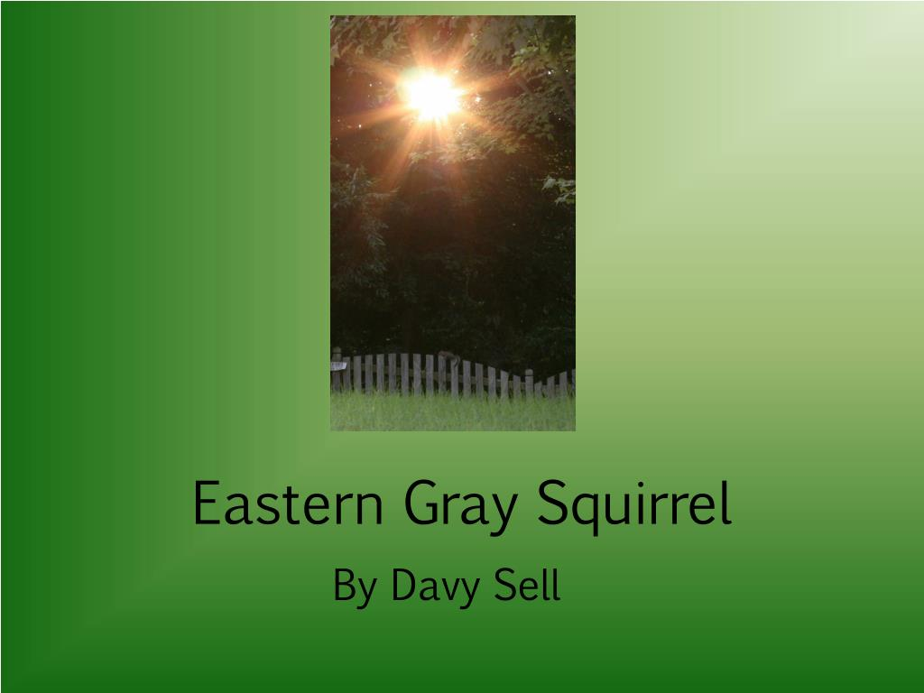 eastern gray squirrel l.