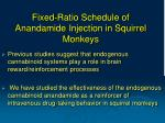fixed ratio schedule of anandamide injection in squirrel monkeys