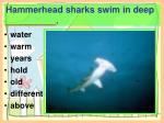 hammerhead sharks swim in deep