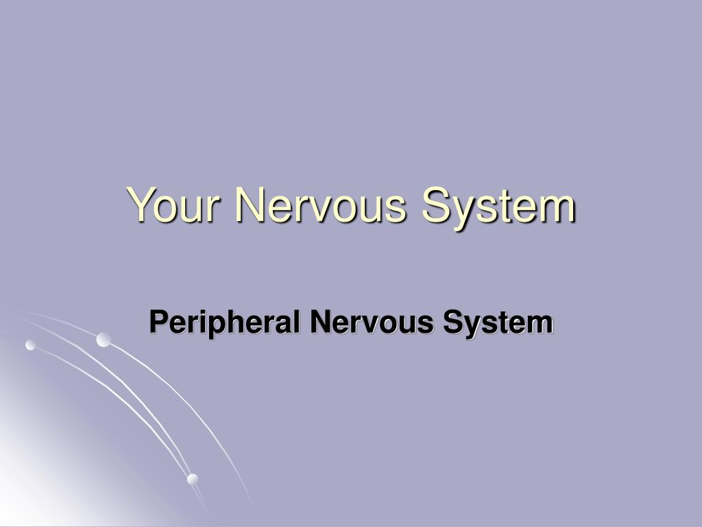 your nervous system l.