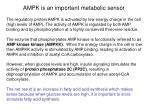 ampk is an important metabolic sensor