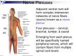 nerve plexuses