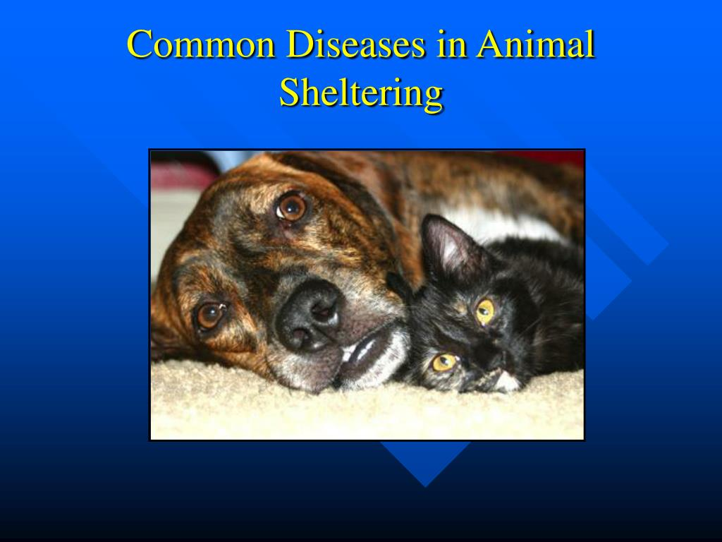 common diseases in animal sheltering l.