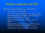 feline leukemia fiv53