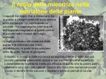 il ruolo delle micorrize nella nutrizione delle piante