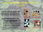 inquadramento tassonomico dei funghi