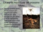 le piante micorrizate del prossimo futuro