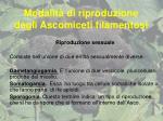 modalit di riproduzione degli ascomiceti filamentosi6