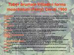 tuber brumale vittadini forma moschatum ferry ceruti 1960