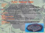 tuber indicum 1892