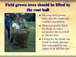 field grown trees should be lifted by the root ball