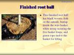 finished root ball