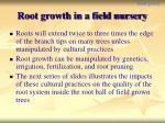 root growth in a field nursery