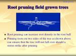 root pruning field grown trees
