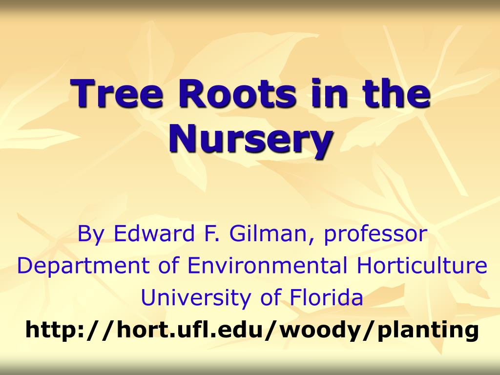 tree roots in the nursery l.