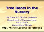tree roots in the nursery43